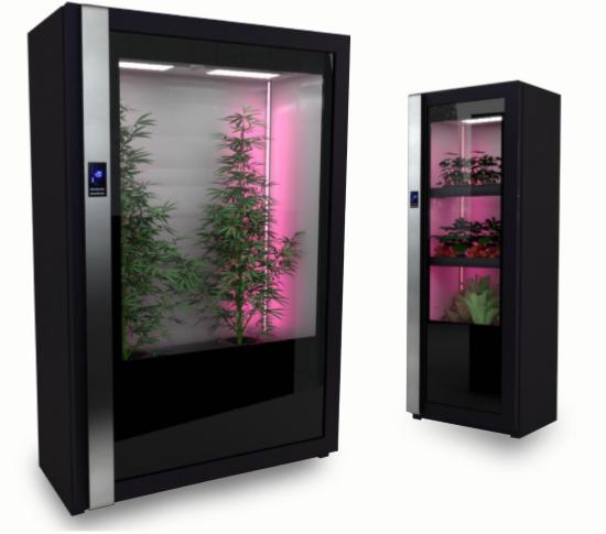 Cultivar cannabis marihuana interior legal atf criptomonedas